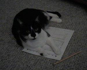 Cat taking SAT